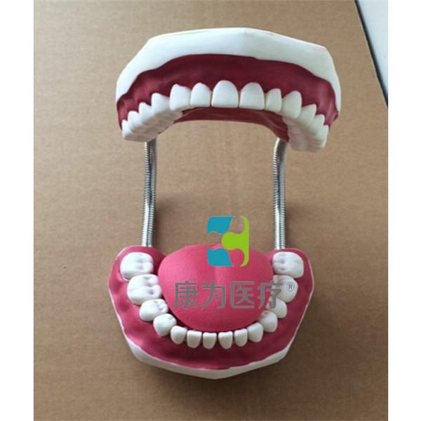"""张掖""""康为医疗""""牙护理保健模型(放大五倍)"""