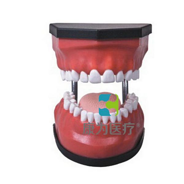 """张掖""""康为医疗""""豪华型牙护理保健模型(32颗牙,可脱卸)"""