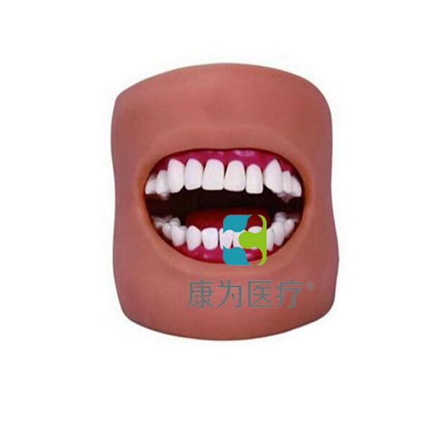 """张掖""""康为医疗""""口腔护理保健模型(带脸颊)"""