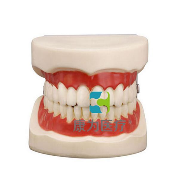 """张掖""""康为医疗""""口腔护理保健模型"""