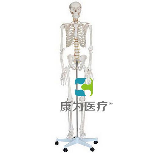 """""""康为医疗""""男性全身骨骼万博app下载官网"""