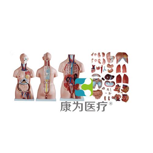 """""""康为医疗""""85CM两性躯干万博app下载官网40件"""