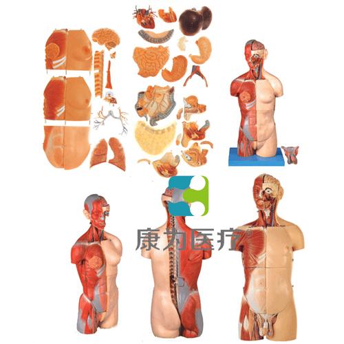 """""""康为医疗""""男、女两性互换肌肉内脏背部开放式头颈躯干万博app下载官网"""