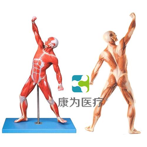 """""""康为医疗""""人体全身肌肉运动万博app下载官网"""