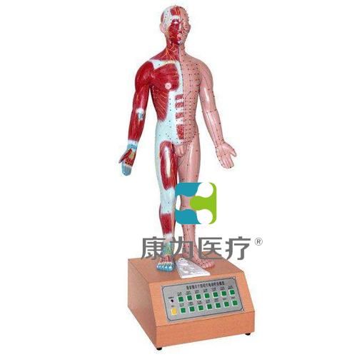 """""""康为医疗""""电动十四针灸模型"""