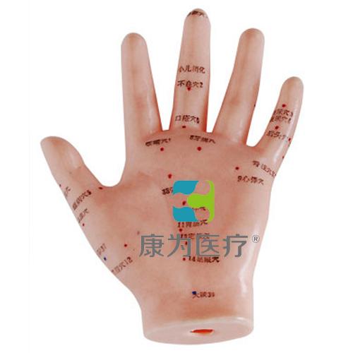 """张掖""""康为医疗""""手针灸模型13CM"""