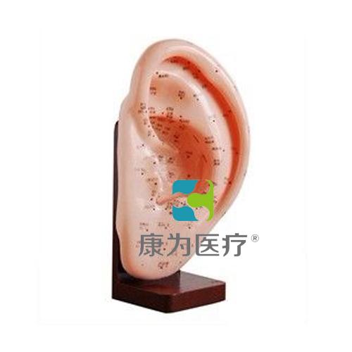 """张掖""""康为医疗""""耳针灸模型22CM"""