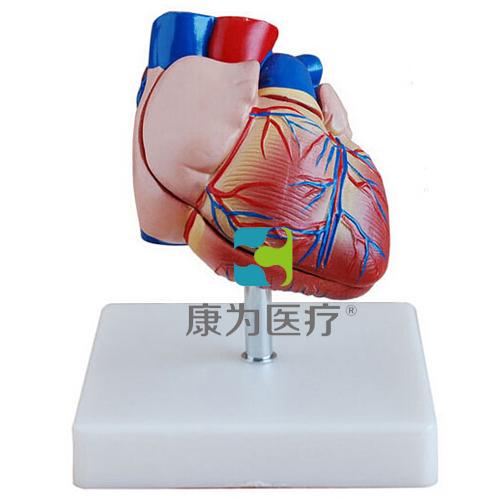 """""""康为医疗""""新型自然大心脏解剖万博app下载官网"""