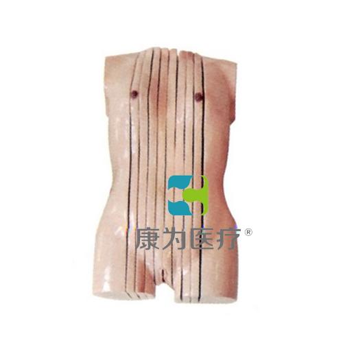 """张掖""""康为医疗""""女性人体躯干矢状断层解剖模型"""