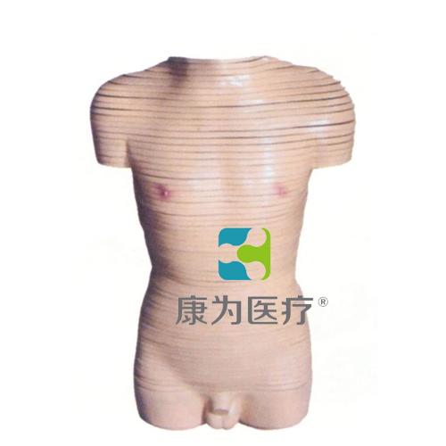 """张掖""""康为医疗""""男性躯干横断断层解剖模型"""