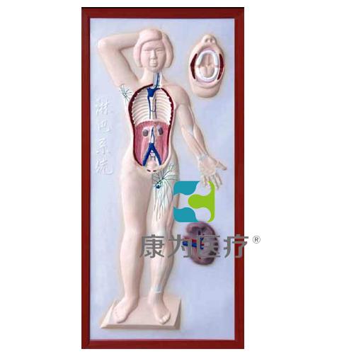 """张掖""""康为医疗""""淋巴系统浮雕模型"""