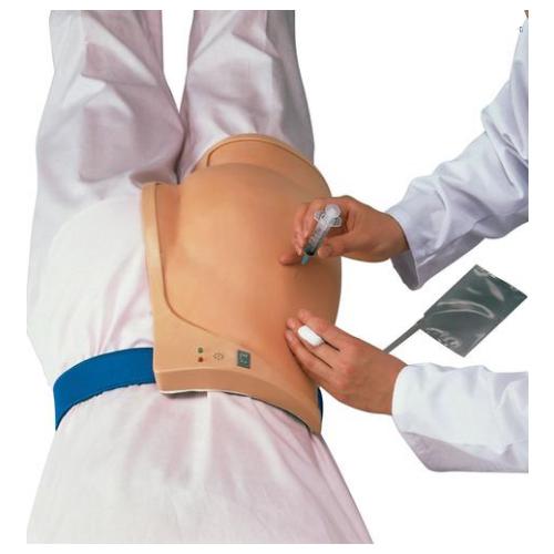 德国3B Scientific®臀部肌肉注射模拟