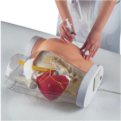 德国3B Scientific®二合一臀部肌肉注射模拟