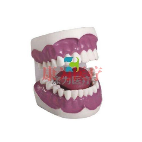 """张掖""""康为医疗""""牙护理保健模型(28颗牙)(放大3倍)"""