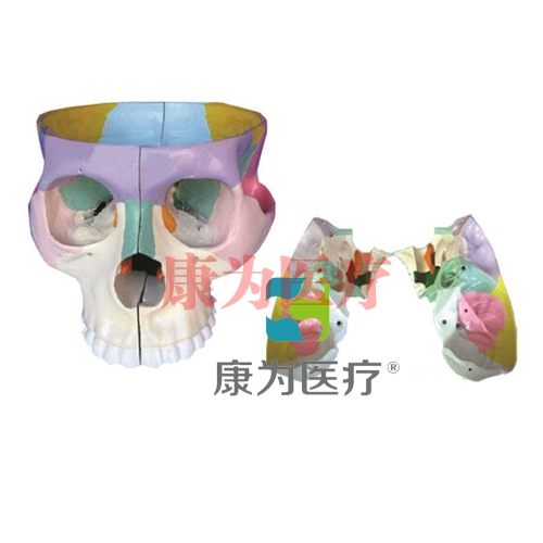 """""""康为医疗""""颅底解剖放大万博app下载官网"""