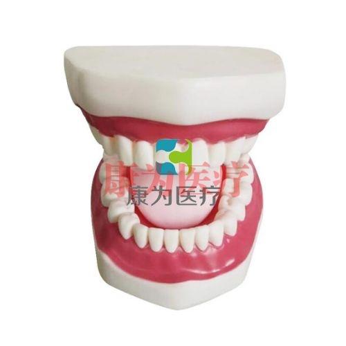 """张掖""""康为医疗""""口腔护理保健模型(带舌)"""
